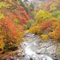 秋の照葉峡