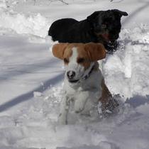 雪とカカオ