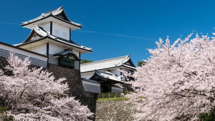 金沢城・桜(春)