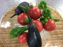 直営農場 野菜