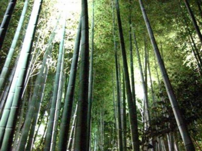 高台寺ライトアップ竹林
