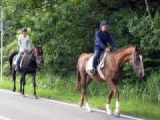 ●【乗馬トレッキング0.5・オプション】大山の麓をお馬でお散歩とフランス料理を堪能〔現金特価〕