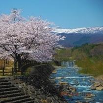 こけし橋から見た蔵王連峰の桜と松川
