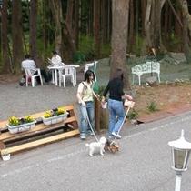アルミュールの廻りのペンション街は車通りが少なく気軽なお散歩コースです(^^)/