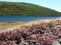 秋の白馬大池