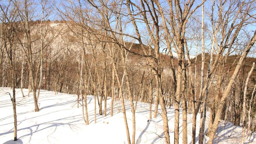 *周辺(冬)/ウインタースポーツを楽しむなら、志賀高原がオススメです!