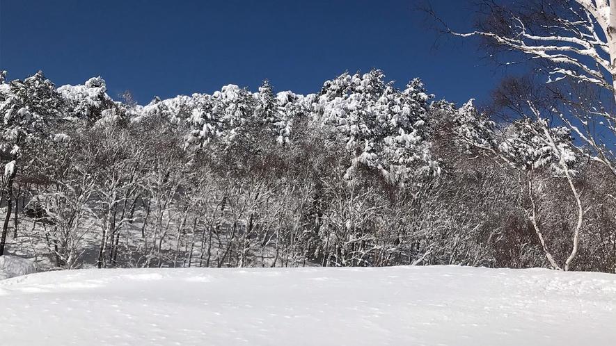 *冬の志賀高原/白銀の世界が広がる冬の晴れた日には、思わずシャッターを押したくなる景色が広がります。