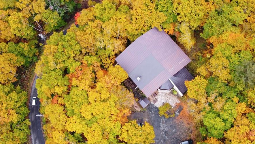 *秋の志賀高原/シラカバやダケカンバの紅葉はまさに絶景!当館周辺も、赤や黄色に一面染まります!