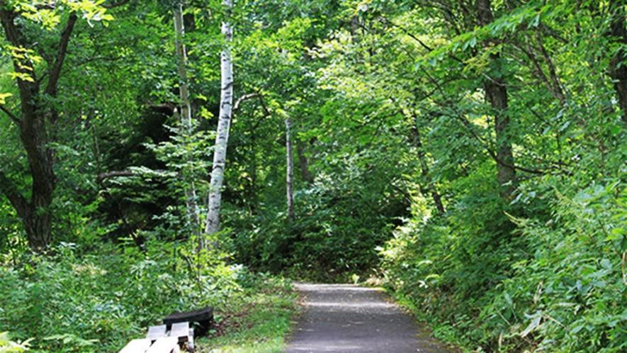 *トレッキング/グリーンシーズンには、森林浴をしながらトレッキングを楽しめます。