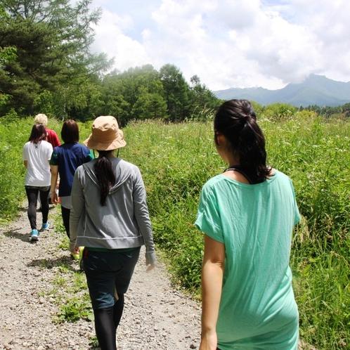 <ウォーキング>清々しい空気の八ヶ岳高原の林道を歩きます。鹿やリスに出会うことも…