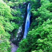 新緑の八滝