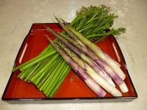 春湯沢の山菜