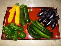 当館菜園収穫