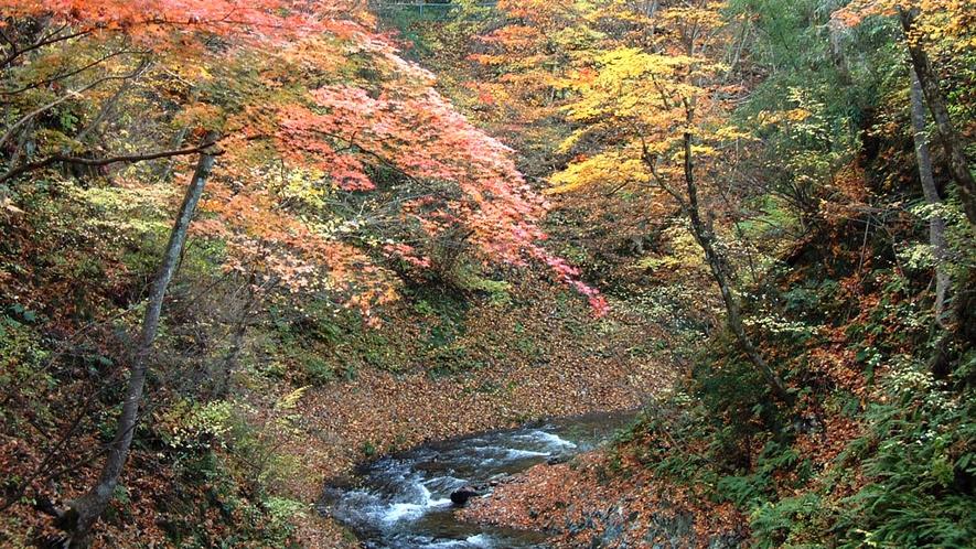 秋の内村川