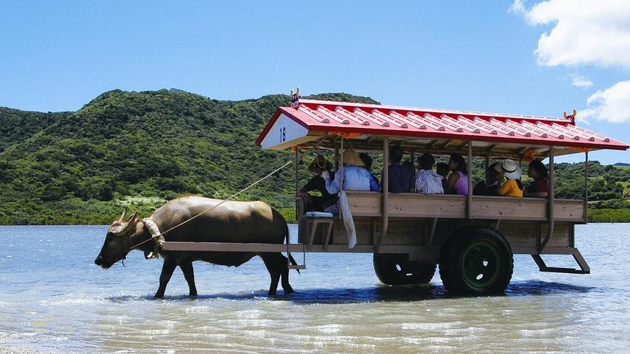 【観光イメージ】由布島(ゆぶじま)の水牛車
