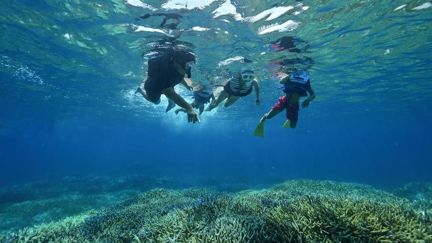 【観光イメージ】スノーケリングツアー:南国のサンゴや魚を見に行こう!