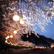 園内広場で夜桜観賞♪