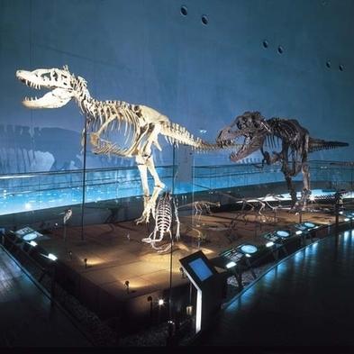 【恐竜博物館&越前松島水族館の入場券付き】福井の人気テーマパークを巡る旅!楽プラン