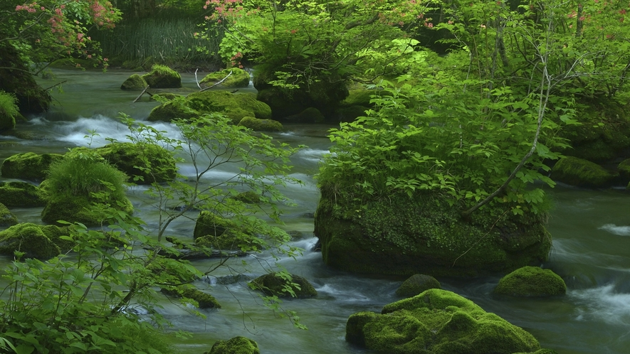 【奥入瀬渓流/春】 車で約1時間30分 新緑の芽吹く春の様子です。  八戸駅西口からバスで約2時間