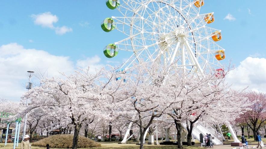 【八戸公園/桜の季節】 車で約16分 動物園・遊園地・植物園・芝生広場などのゾーンがあります。
