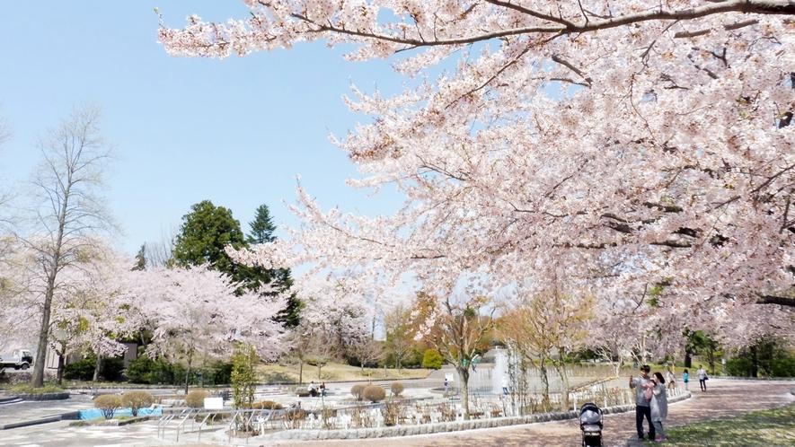 【八戸公園/桜の季節】 車で約16分 約2000本の桜の木が園内を染め上げます。