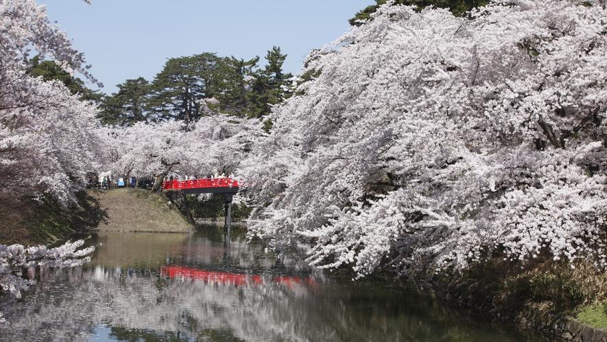 【弘前さくらまつり】 桜と赤い和橋が、日本の美しさを象徴します。