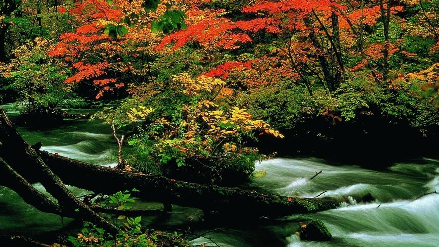 【奥入瀬渓流/秋】 車で約1時間30分 紅葉が美しい秋の様子です。