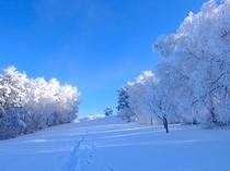 青空と雪、樹氷!青と白の2色の世界