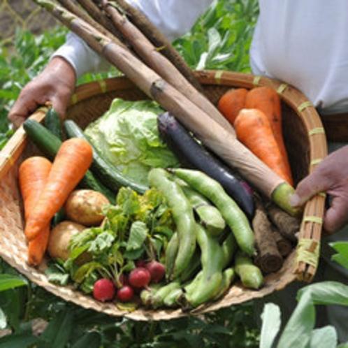彩り鮮やか!新鮮な地野菜