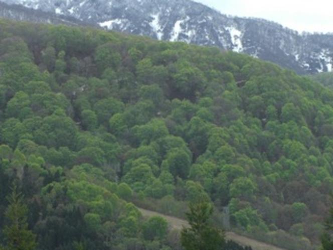 野沢温泉の山の新緑