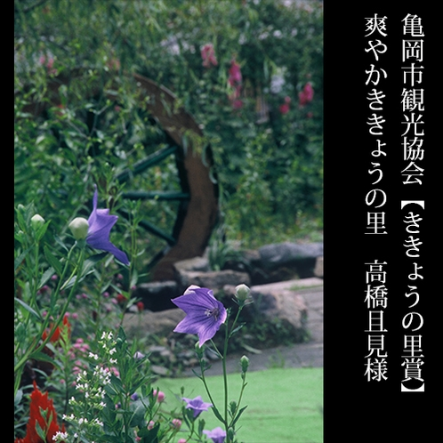 ▲亀岡市観光協会【ききょうの里賞】爽やかききょうの里 高橋且見様