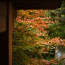 紅葉の時期は、部屋からもきれいな紅葉を見ることが出来ます。