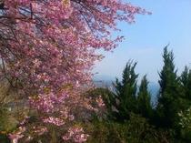 露天風呂から見える3月の景色。
