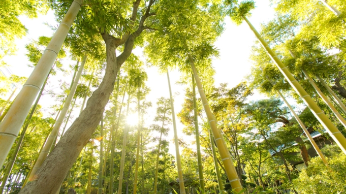 【秋冬旅セール】【瑞穂】季節の会席料理と石和の自然を満喫☆2食付