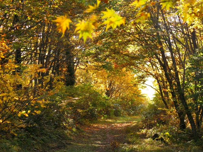 ゲレンデへの小径(秋)