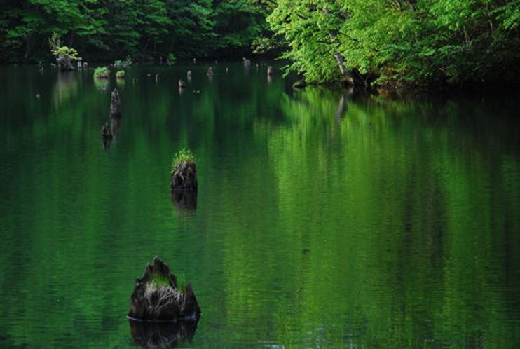 新緑の曲沢沼