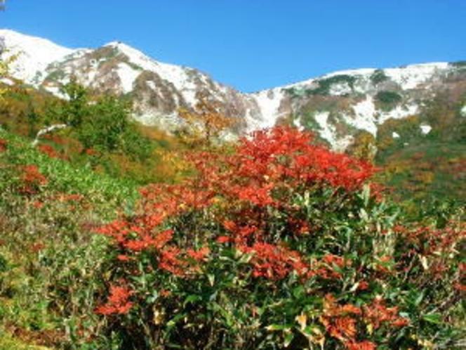 秋の自然園