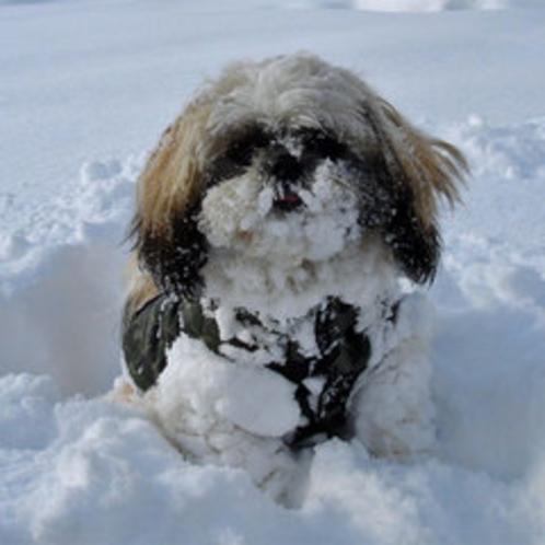 *ワンちゃん喜び雪まみれ♪