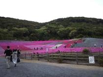 志摩市観光農園~芝桜~