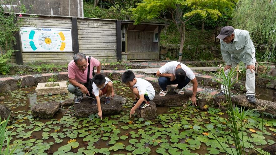 めだか池で自然観察♪新発見があるかも?