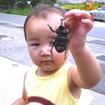 子供カブトムシ