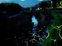 夜の夜市川を照らす蛍の群れ