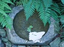 中庭の風景3