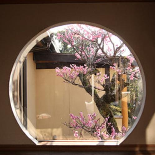 離れの渡り廊下から見える梅