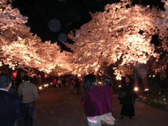 高田城の夜桜