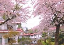 桜満開の雄飛館