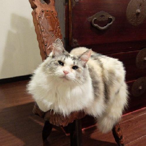 看板猫ふくちゃん♪