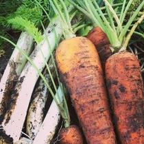 自家菜園の野菜たち