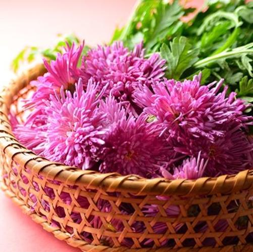 秋の味覚、食用菊「もってのほか」
