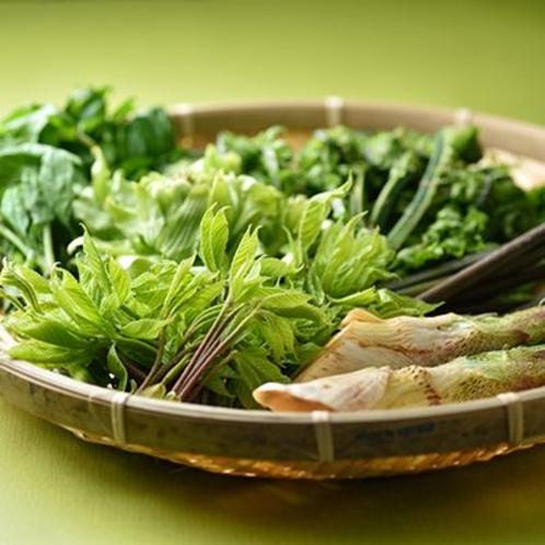 春は地元で採れた新鮮な【山菜】